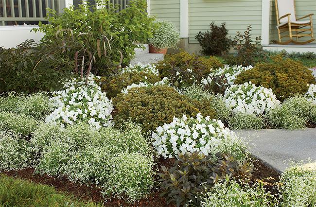diamond frost garden bed